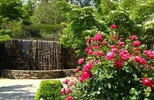 roses1-300x196